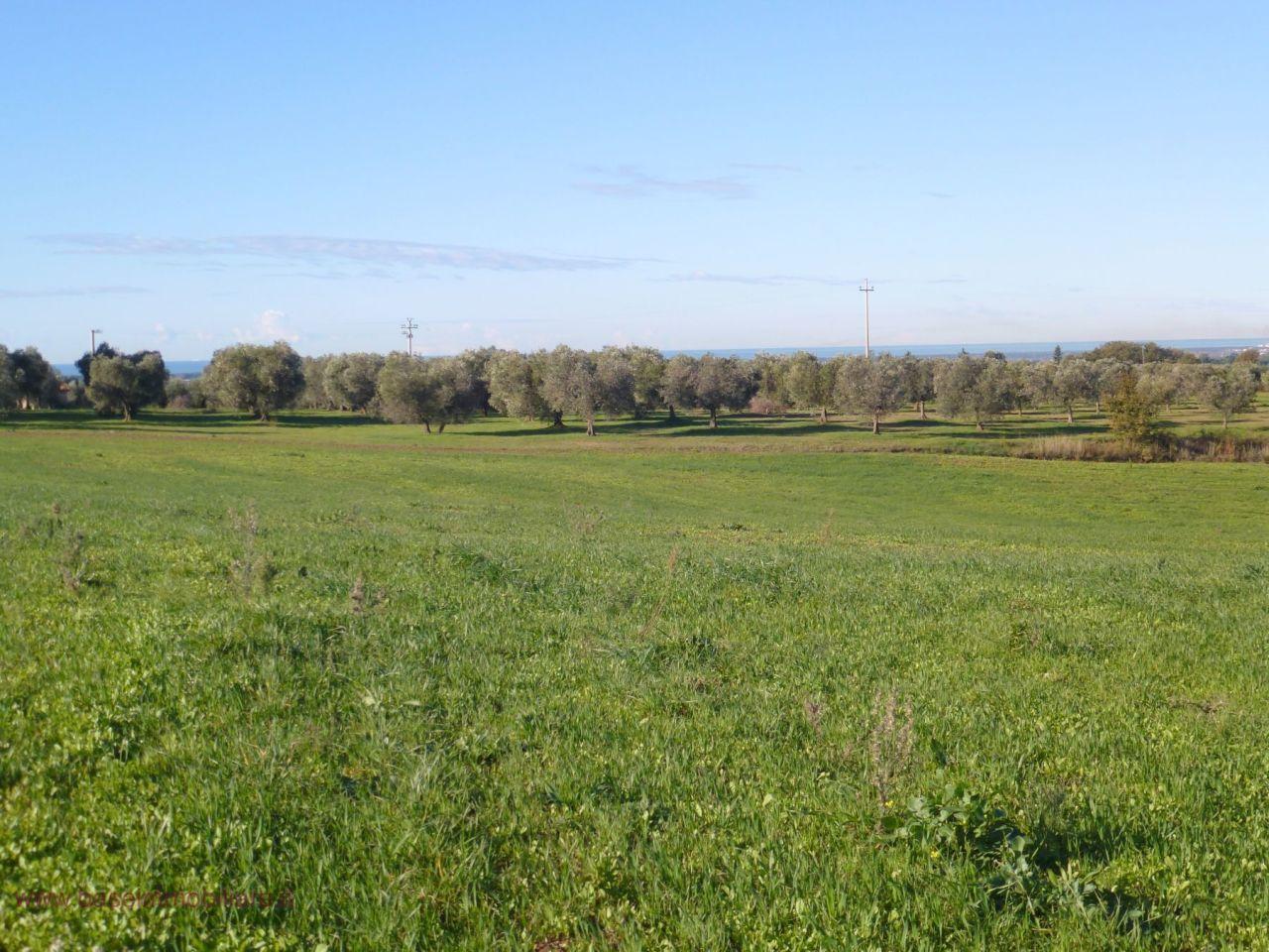 Terreno Edificabile Residenziale in vendita a Bibbona, 185 locali, prezzo € 900.000 | CambioCasa.it
