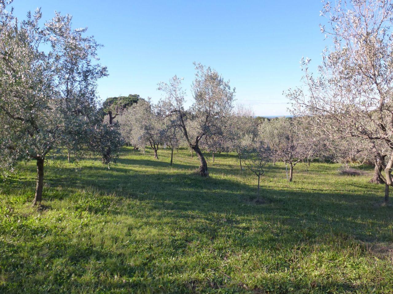 Terreno Edificabile Residenziale in Vendita a Bibbona