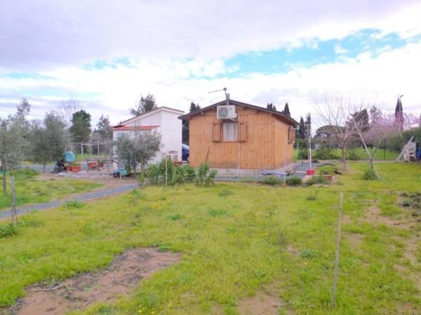 Agricolo - Seminativo a Cecina Rif. 9373955