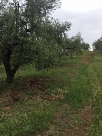 Agricolo a Fonte Nuova Rif. 9958031