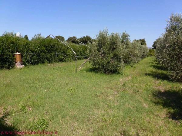 Agricolo - Uliveto a Vada, Rosignano Marittimo Rif. 9374008