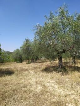 Rif.(G1196) - Agricolo, Sant'Angelo Romano ...