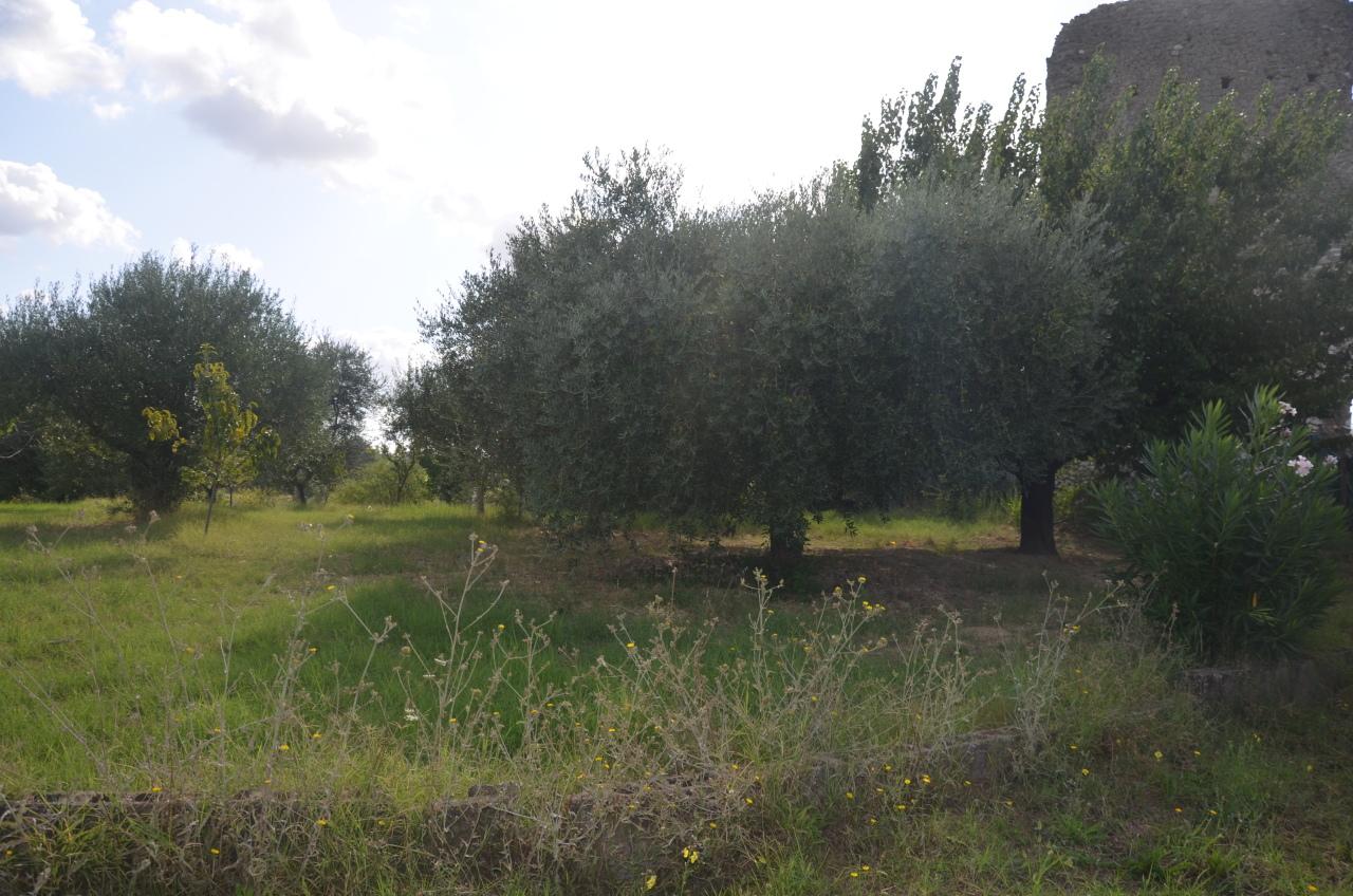 Agricolo - Area verde a Fonte Nuova Rif. 11072962