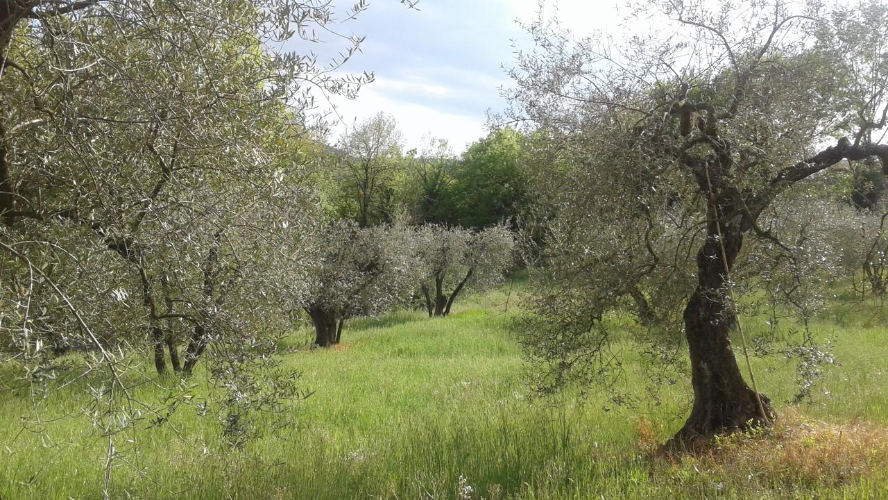 Agricolo - Seminativo a Amelia Rif. 10297903