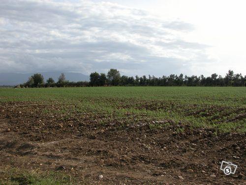Agricolo a Bellaria-Igea Marina Rif. 9374176