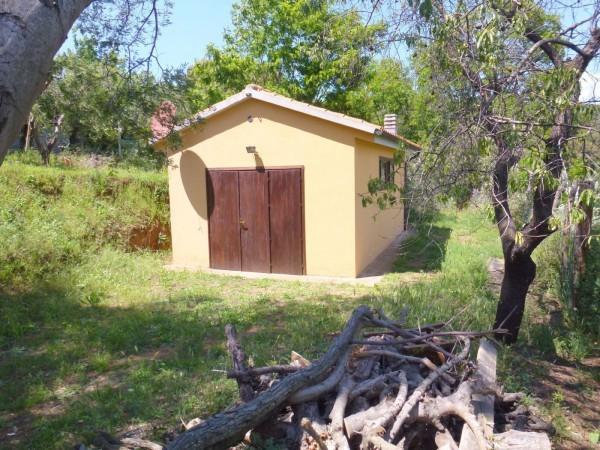 Agricolo - Uliveto a Piombino Rif. 9373946