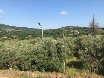 Indipendente, Arezzo