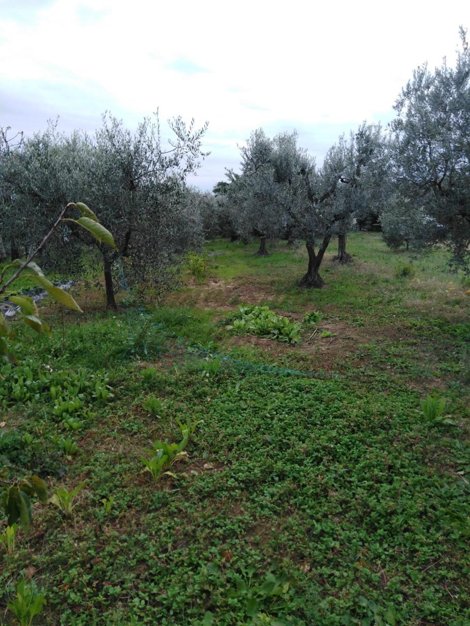 Agricolo a Cecina