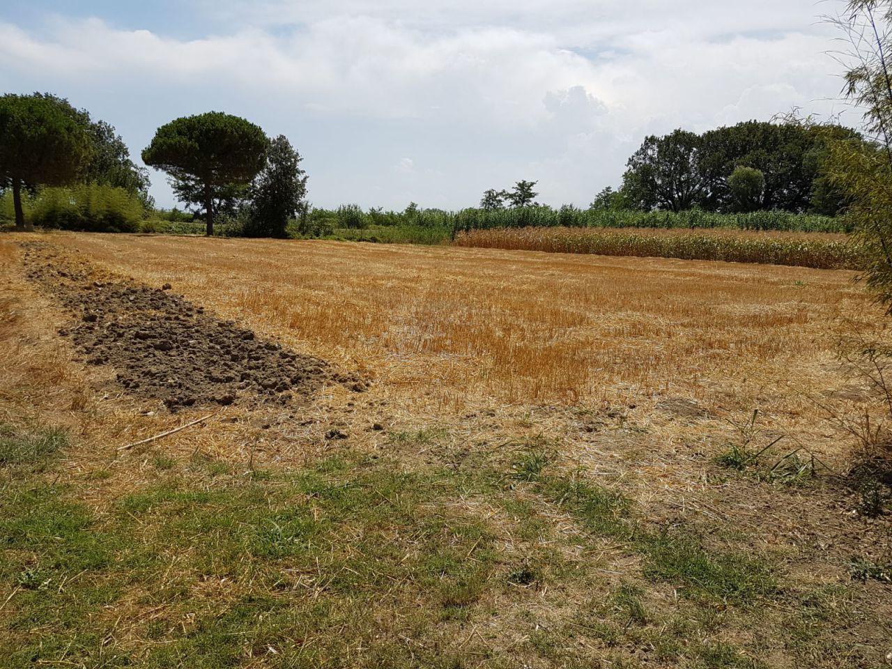 Agricolo  Bellaria-Igea Marina TERR-35