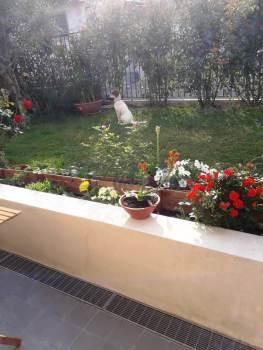 Immagine di Appartamento Quadrilocale In Affitto Pompeiana (IM)  non disponibile