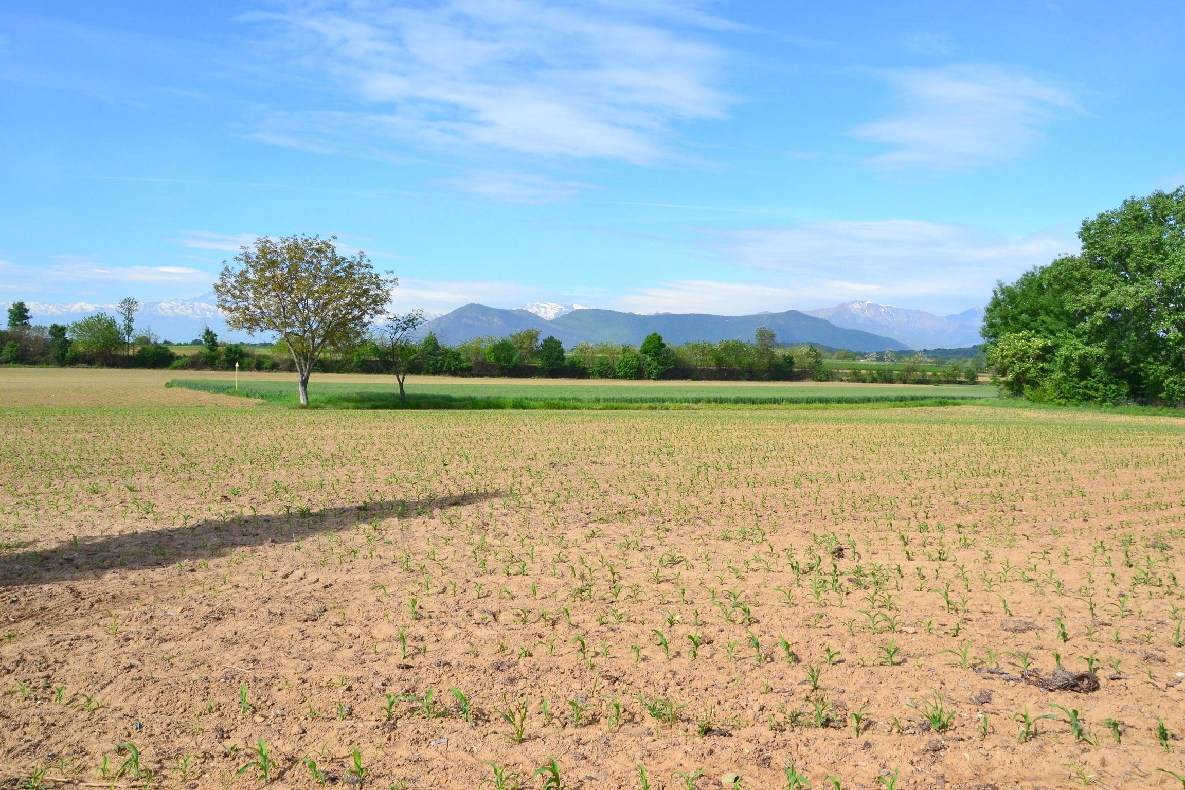 Tetti Neirotti, Rivoli. Terreno agricolo di 9.270 mq in posizione soleggiata