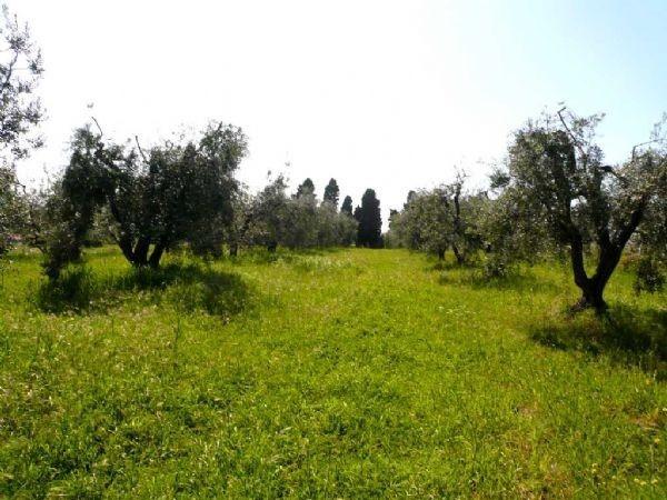 Agricolo - Uliveto a Rosignano Marittimo