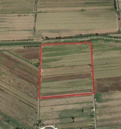 Agricolo a Donoratico, Castagneto Carducci Rif. 9374005