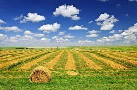 Agricolo a Mentana Rif. 9958033