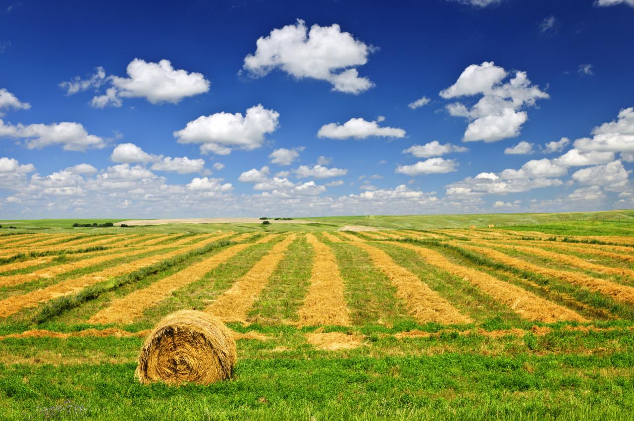 Agricolo - Seminativo a Fiorenzuola d'Arda