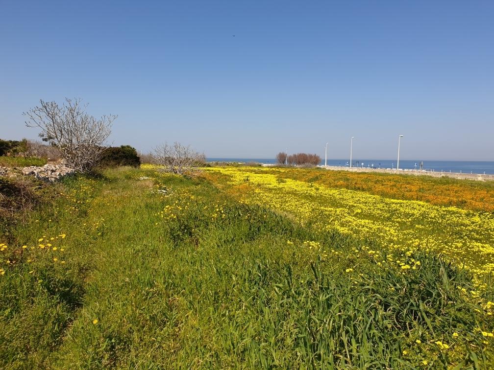 Agricolo - Area verde a Giovinazzo Rif. 9910771