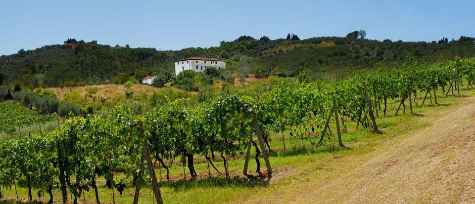Azienda agricola Lucca S. Concordio di Moriano IA00412 img 5