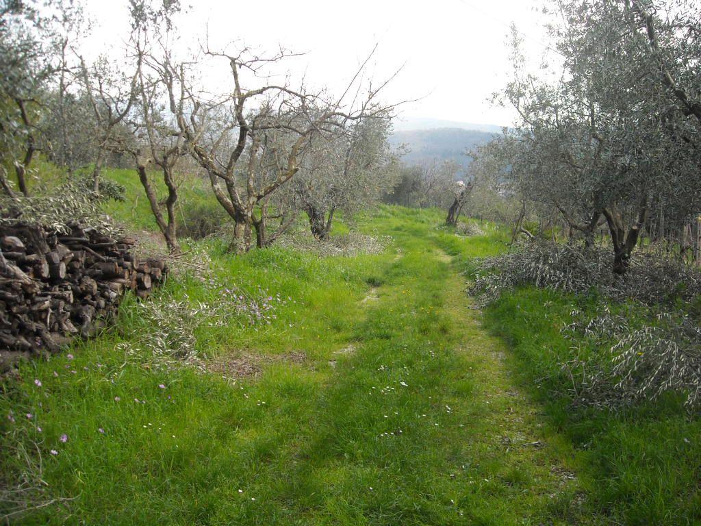 Terreno Agricolo in vendita a Montale, 1 locali, prezzo € 250.000   CambioCasa.it