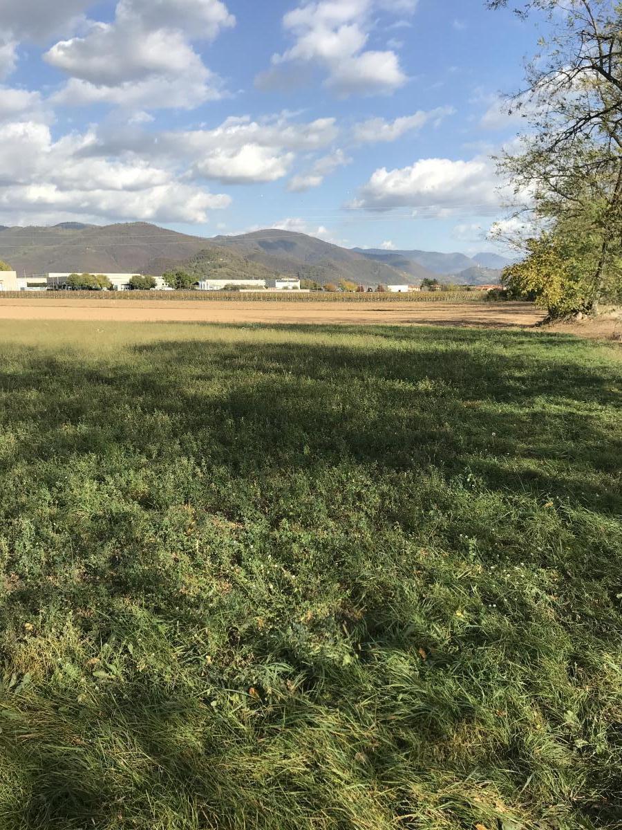 TERRENO AGRICOLO a Chiaravalle