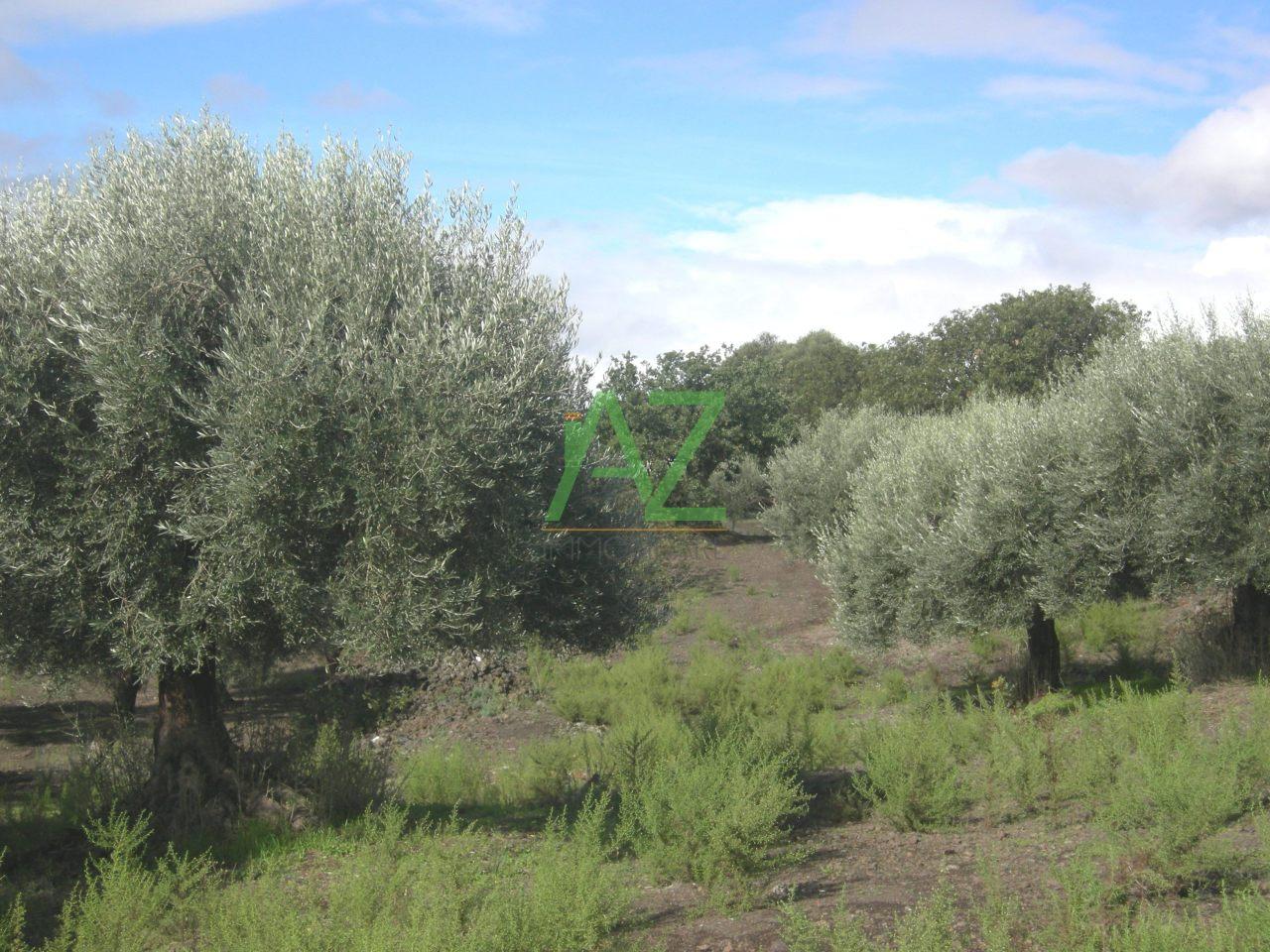 Agricolo - Uliveto a Calatafimi, Belpasso Rif. 8476720