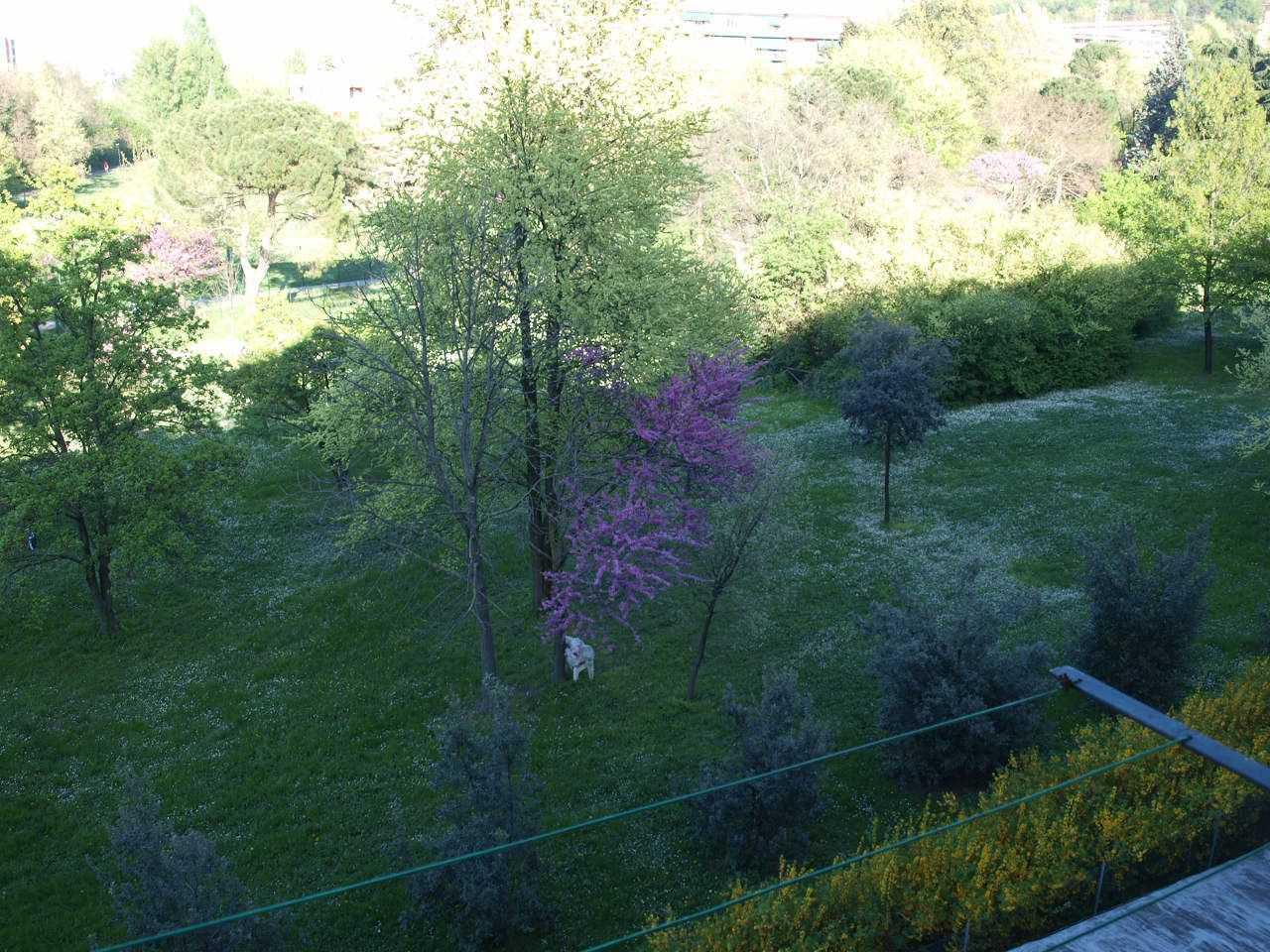 Appartamento in affitto a Casalecchio di Reno, 3 locali, prezzo € 650 | CambioCasa.it