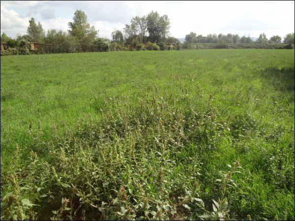 Terreno Agricolo in Vendita a Campi Bisenzio