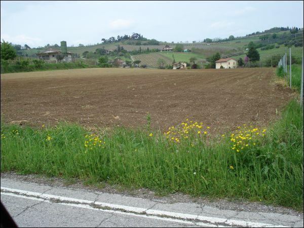 Agricolo a Settecrociari, Cesena Rif. 10547181