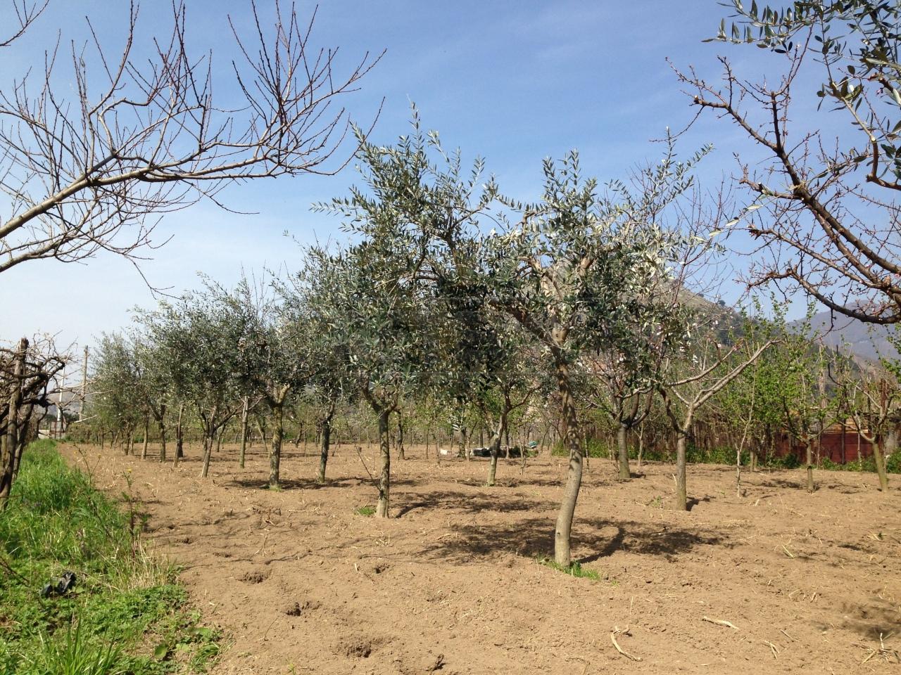 Agricolo - Seminativo a Castel San Giorgio Rif. 4130905
