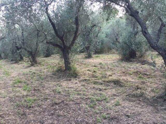 Agricolo - Coltivato a Periferia, Orsogna Rif. 4151691