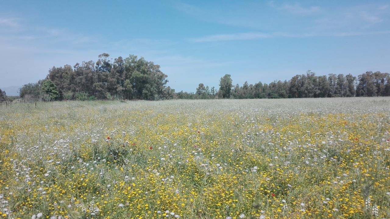 Agricolo - Seminativo a San Sperate Rif. 6521606