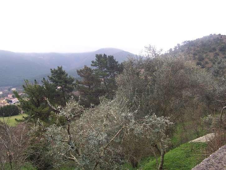 Terreno Agricolo in vendita a Trissino, 9999 locali, prezzo € 25.000 | CambioCasa.it