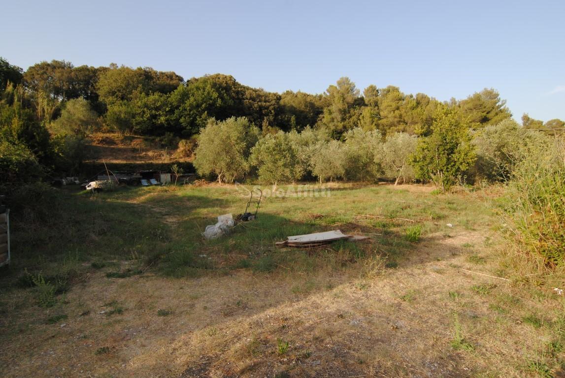 Agricolo a Limoncino, Livorno Rif. 4131525