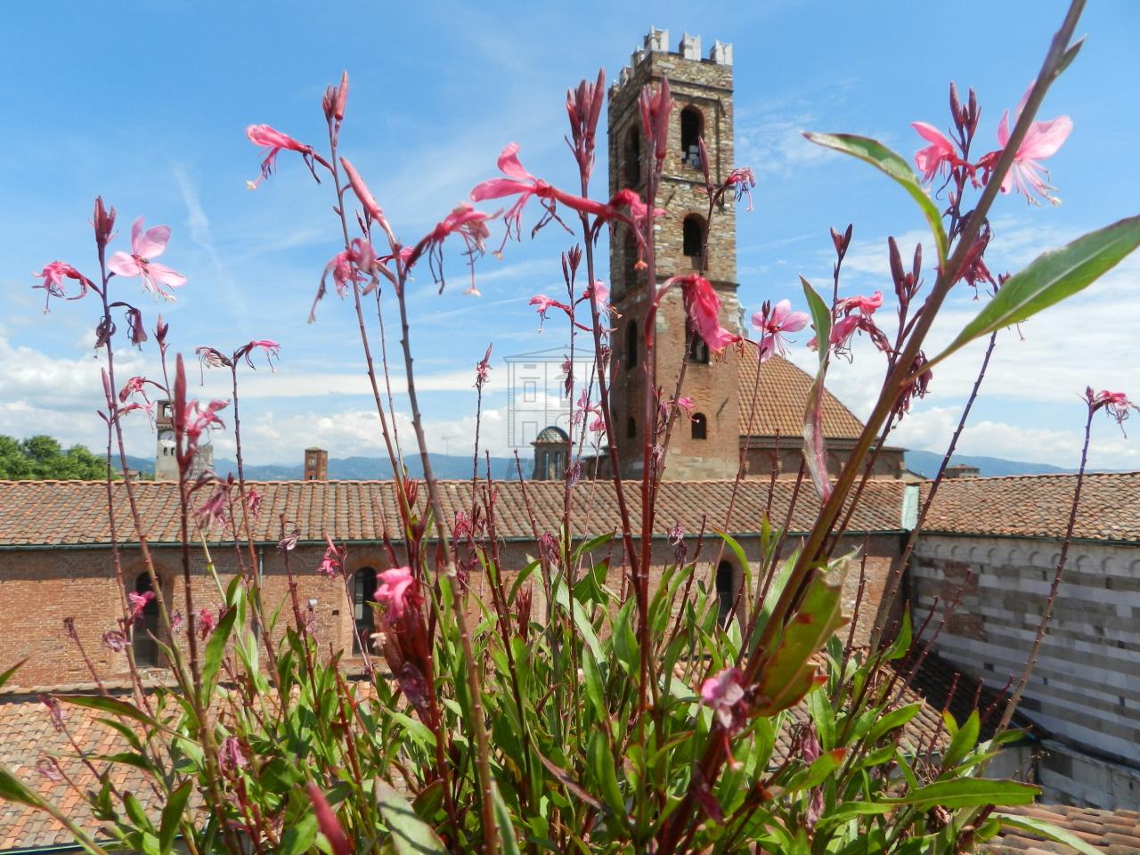 IA01424-1 Lucca Centro storico