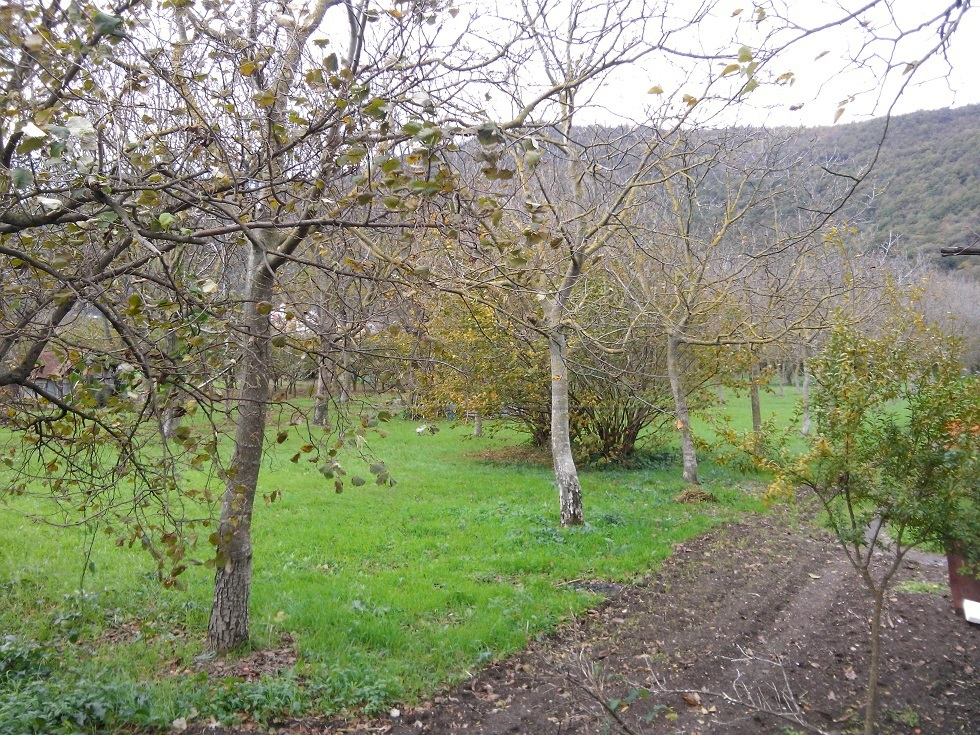 Agricolo - Area Verde a Pandola, Mercato San Severino Rif. 8211884