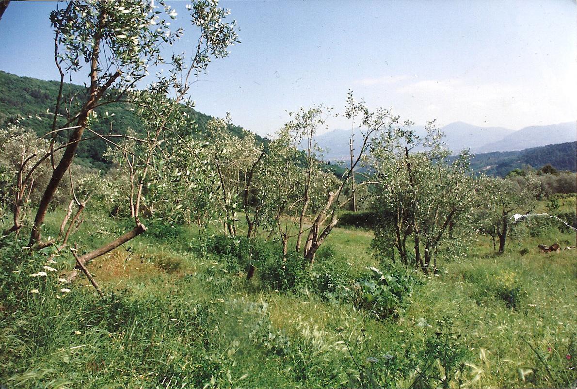 Casa colonica Lucca S. Gemignano di Moriano IA03287 img 6