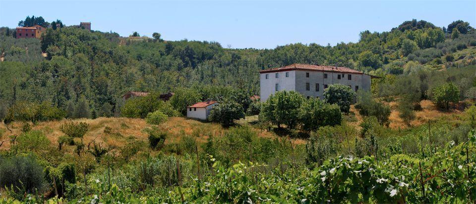 Azienda agricola Lucca S. Concordio di Moriano IA00412 img 6
