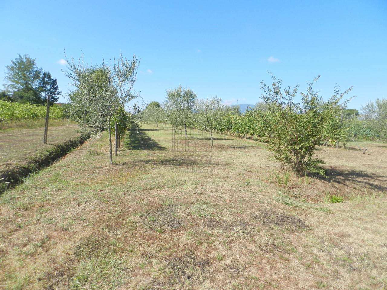 Villa singola Altopascio Spianate IA01325 img 16