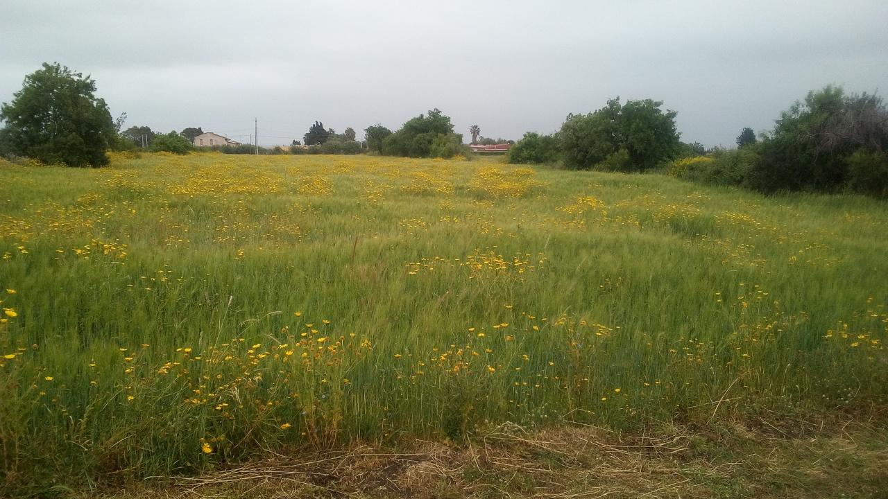Terreno Agricolo in vendita a Siracusa, 9999 locali, prezzo € 58.000 | PortaleAgenzieImmobiliari.it