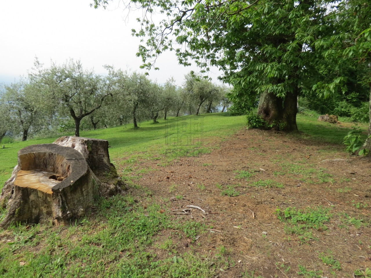Casa colonica Lucca IA03133 img 4