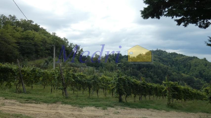 Azienda Agricola - coltivazione biologica a San Carlo, Cesena Rif. 9895285