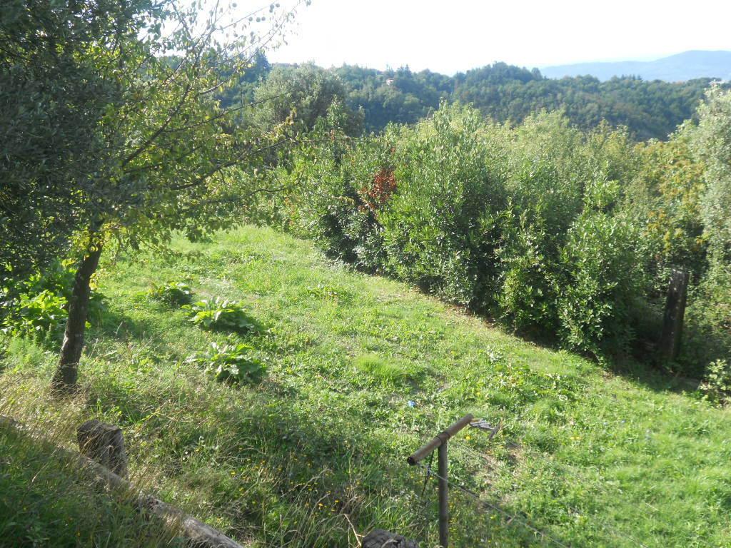 Agricolo - Seminativo a Sarzana Rif. 10071320