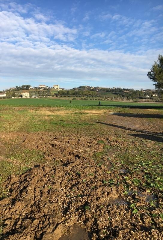 Terreno Agricolo in vendita a Monsampolo del Tronto, 1 locali, prezzo € 800.000   PortaleAgenzieImmobiliari.it