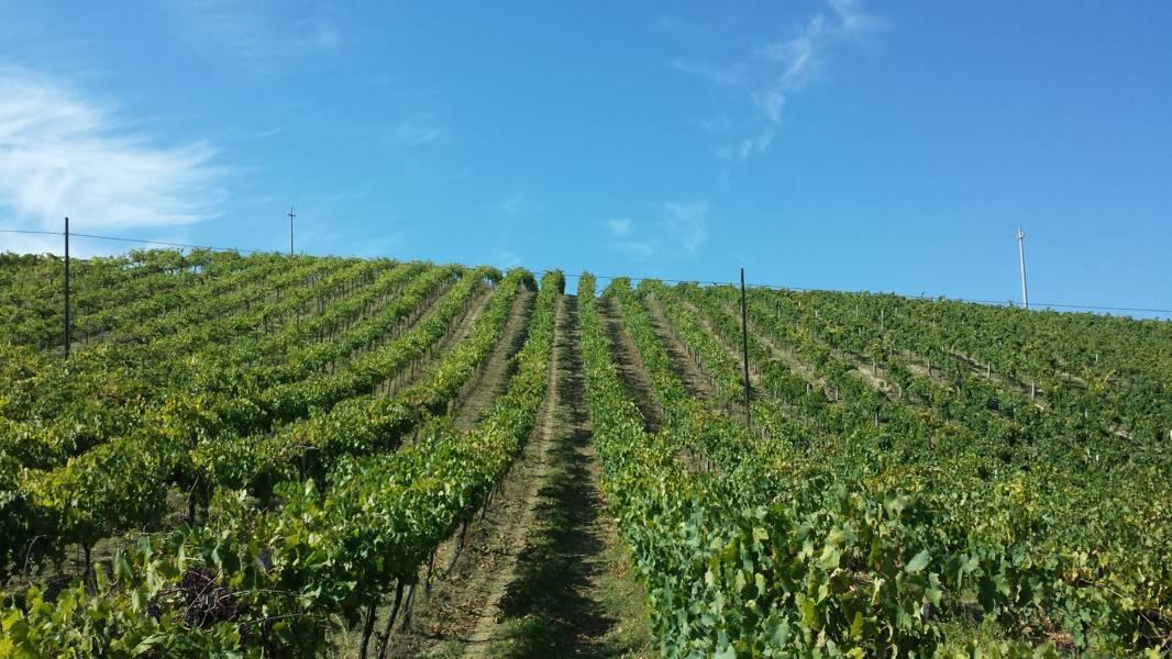 Agricolo - Vigneto a Montefiore dell'Aso Rif. 4144718