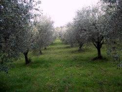 Terreno agricolo in Vendita a Ascoli Piceno, 25'000€, 5515 m²