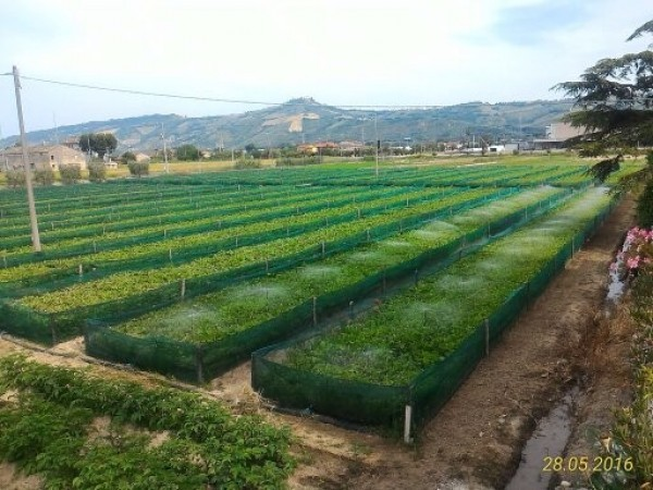 Azienda Agricola a Monteprandone Rif. 9787105