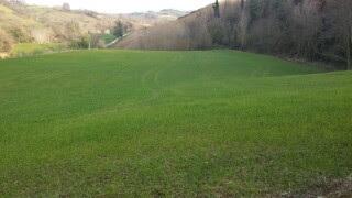 Terreno Agricolo in vendita a Mondavio, 1 locali, prezzo € 360.000   CambioCasa.it